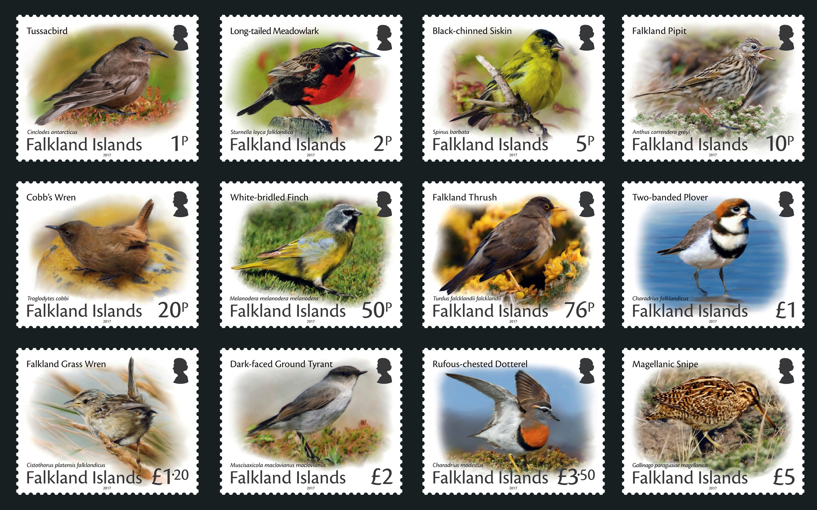Falkland_Islands_Small_Birds_Definitive.jpg